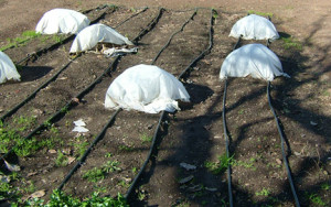 Frost protecting plant blankets